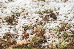 Jonge spruiten die van gras, hun manier maken door de sneeuw tegen de achtergrond van de herfstgebladerte Plaats voor tekst Het c royalty-vrije stock foto