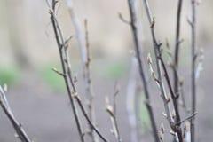 Jonge spruiten van bomen royalty-vrije stock afbeeldingen