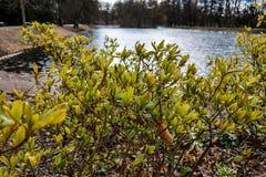 Jonge struiken in het park die het meer overzien royalty-vrije stock foto