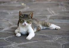 Jonge tabby kat die op de vloer ligt Royalty-vrije Stock Fotografie