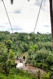 Jonge toeristenvrouw die op de klip in het wildernisregenwoud en de rivier van een tropisch eiland van Bali slingeren Schommeling stock afbeeldingen