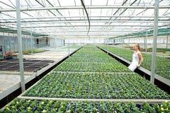 Jonge tuinmanvrouw die zich in een serre bevinden Stock Afbeelding
