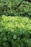 Jonge ui, sla, rucola, bonen en bieten, in plantaardige permaculturecultuur Milieuvriendelijke binnenplaatstuin, plantaardige Gar Royalty-vrije Stock Foto's