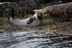 Jonge verbindingen op Hemeleiland in Schotland Stock Afbeeldingen