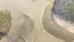 Jonge vissen in een strandvulklei stock videobeelden