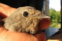 Jonge vogel Royalty-vrije Stock Foto's