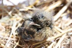 Jonge vogel Stock Foto