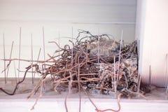 Jonge vogels die in een vogelnest zitten stock foto's