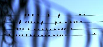 Jonge vogels, liefdelied voor u royalty-vrije stock afbeeldingen