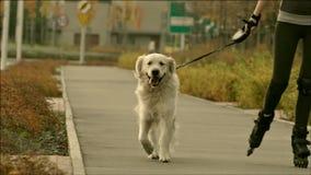 Jonge vrolijke vrouw die de rolschaatsen met hond berijden stock footage