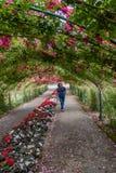 Jonge vrouw aan het eind van een tunnel van rozen royalty-vrije stock foto