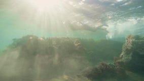 Jonge vrouw in bikini en beschermende brillen die onderwateroverzees zwemmen en op mariene wereld letten Vrouw die in glazen binn stock video