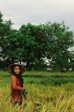 jonge vrouw die aan de padievelden met een traditionele kegelhoed werken royalty-vrije stock foto's