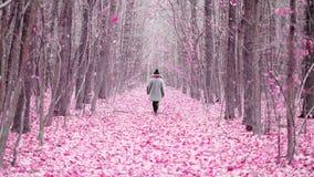 Jonge vrouw die alleen langs sleep in purpere bos Roze bladeren of bloemblaadjes op weg lopen Achter mening Reis, vrijheid stock videobeelden