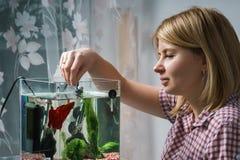 Jonge vrouw die bètavissen in aquarium thuis voeden royalty-vrije stock foto's
