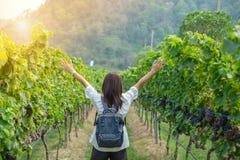Jonge Vrouw die backpacker, Aziatische reiziger reizen die zich in mooie Wijngaarden in de herfst bevinden stock afbeelding