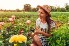 Jonge vrouw die bloemen in tuin verzamelen Tuinman knipsel en het bewonderen rozen Het tuinieren concept stock foto