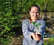 Jonge vrouw die een zaailingspeper houden Royalty-vrije Stock Foto