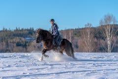 Jonge vrouw die haar Ijslands paard in diepe sneeuw en zonlicht berijden royalty-vrije stock foto's