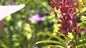 Jonge vrouw die in hoed van bloeiende bloemen in de zomertuin genieten Meisje het snuiven geur van bloeiende orchideeën in bloemt stock video
