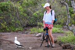 Jonge vrouw die Nazca-Domoor, Genovesa-Eiland, Galapago fotograferen Stock Afbeeldingen