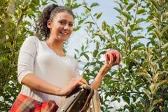 Jonge vrouw die rode appelen in een boomgaard plukken royalty-vrije stock foto