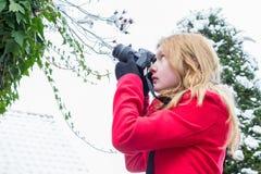 Jonge vrouw die sneeuw op takken fotograferen stock afbeelding