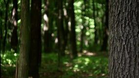 Jonge vrouw die van achter boom in het bos golven stock video