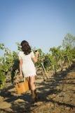 Jonge Vrouw die van een Gang en een Wijn in Wijngaard genieten Stock Afbeeldingen