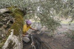 Jonge vrouw die zachte traditionele netten voor oogst voorbereiden Royalty-vrije Stock Afbeelding