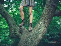 Jonge vrouw die zich in een boom bevinden Stock Foto's