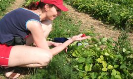 Jonge vrouw in een aardbei field2 Royalty-vrije Stock Afbeeldingen