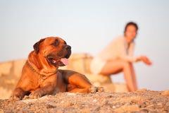 Jonge vrouw en de hond Royalty-vrije Stock Foto's