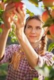 Jonge vrouw het plukken appelen van appelboom op een mooie zonnige som Royalty-vrije Stock Afbeeldingen