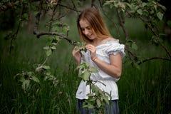 Jonge vrouw omhoog op ladder het plukken appelen van een appelboom  stock foto