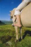 Jonge vrouw op paard stock foto's