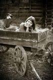 Jonge vrouw in paardkar stock foto's