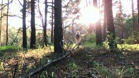 Jonge vrouwelijke wandelaar in bos stock video