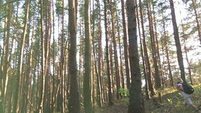 Jonge vrouwelijke wandelaar in bos langzame motie stock videobeelden