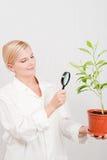 Jonge vrouwelijke wetenschapper botanisch met groene installatie royalty-vrije stock foto's
