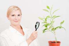Jonge vrouwelijke wetenschapper botanisch met groene installatie stock foto