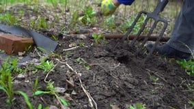 Jonge vrouwen gravende humus door hooivork Grondvoorbereiding voor het planten Met baksteen Sluit omhoog Langzame motie 120fps stock video