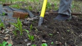 Jonge vrouwen gravende humus door hooivork Grondvoorbereiding voor het planten Met inspanning Sluit omhoog Langzame motie 120fps stock videobeelden