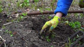 Jonge vrouwen gravende humus door hooivork Grondvoorbereiding voor het planten Met onkruid Sluit omhoog Langzame motie 120fps stock video