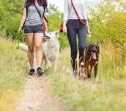 Jonge vrouwen met hun honden het lopen Stock Afbeeldingen
