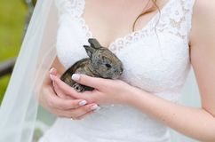Jonge vrouwenbruid die en leuk konijn over de aard glimlachen houden van de parkzomer openlucht Witte huwelijkskleding, groene ac Stock Foto