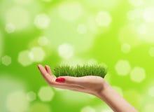 Jonge vrouwenhand met vers groen gras op het Heldere bokehachtergrond Zorg voor het milieuconcept Royalty-vrije Stock Fotografie