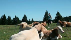 Jonge vrouwenjogging waar de koeien rusten stock videobeelden