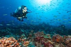 Jonge vrouwenscuba-duiker die koraalrif onderzoeken Stock Afbeelding