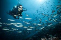 Jonge vrouwenscuba-duiker die koraalrif onderzoeken royalty-vrije stock afbeelding